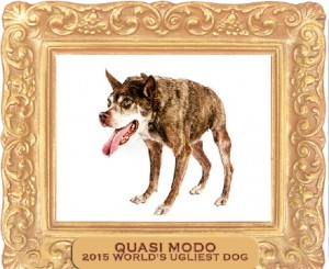 Quasi Modo Wins World's Ugliest Dog Competition