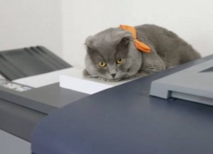 Cat Hired As Communications Manager For Romanian Company, Catbox
