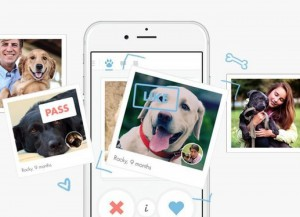 New Tindog App Is A Tinder For Dogs