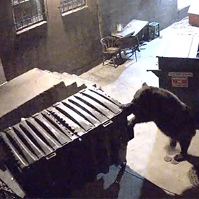 Bear Steals Dumpster From German Restaurant [Video]
