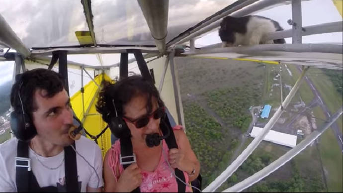 Video Of A Cat Riding On Top Of A Glider Goes Viral