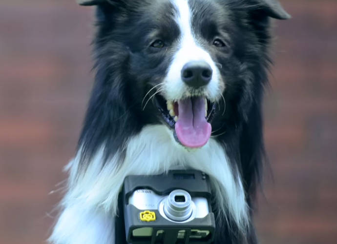 """Meet the First """"Phodographer"""": Nikon's Heartbeat Camera Lets Dogs Take Photos"""