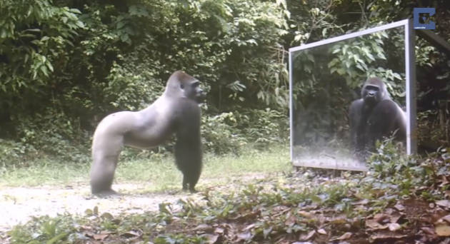 Hilarious New Video Shows Animals' Reactions To Seeing Themselves In Mirrors