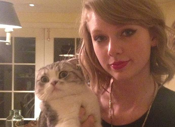 National Cat Day: Hollywood's Biggest Cat Lovers Flaunt The Fur