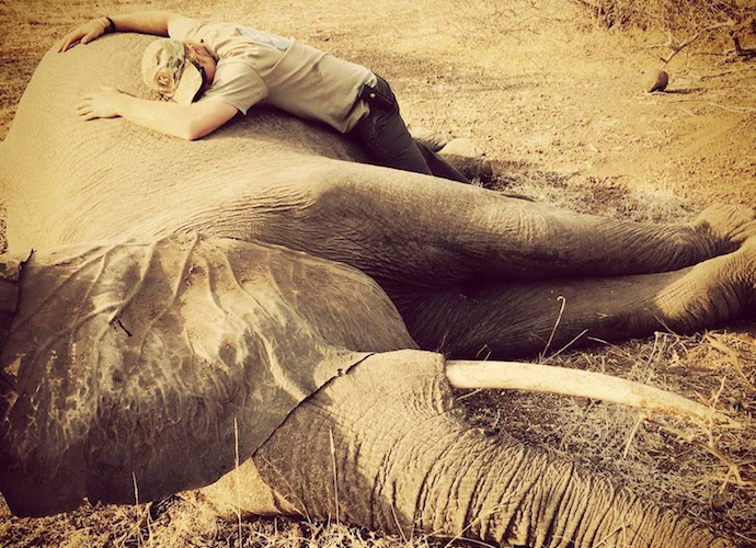 Prince Harry Hugs Sedated Elephant In South Africa