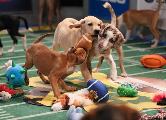 Puppy Bowl 2020: Team Fluff Barely Beats Team Ruff