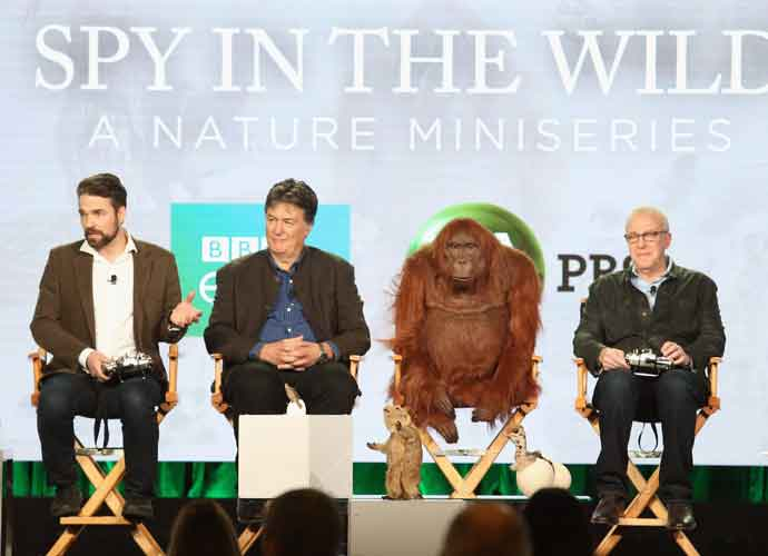 'Spy In The Wild' Producers Sat Down With Animatronic Creature For Press Tour