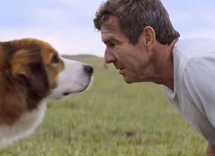 'A Dog's Purpose' Review Roundup: Sickeningly Sweet Just To Make You Cry