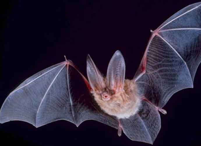 Dead Bat Found In Packaged Fresh Express Salad Mix In Florida