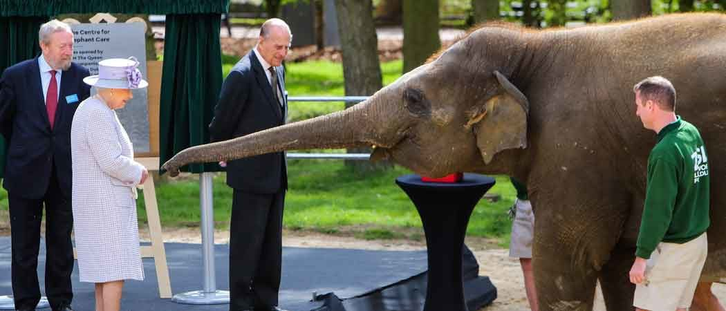 Queen Elizabeth Feeds Elephant During Whipsnade Zoo Visit In Britain