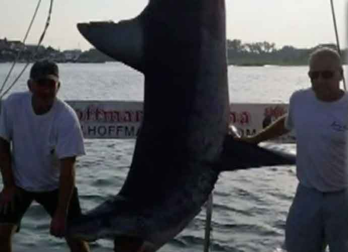 Men Who Caught 926-Pound, 12-Foot Shark Won't Be Named Record Holders