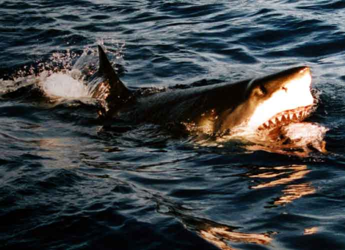 Sharks Surprise Tourists in Shallow Waters At Florida Beach, How To Avoid A Shark Attack