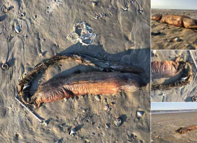 Mysterious Fanged Sea Creature Washes Up On Shore After Hurricane Harvey