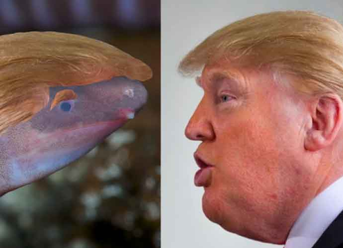 """Worm Officially Named """"Dermophis Donaldtrumpi"""" After Donald Trump"""