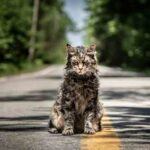 'Pet Sematary' Blu-Ray Review: Performances Shine In Remake Of A Classic