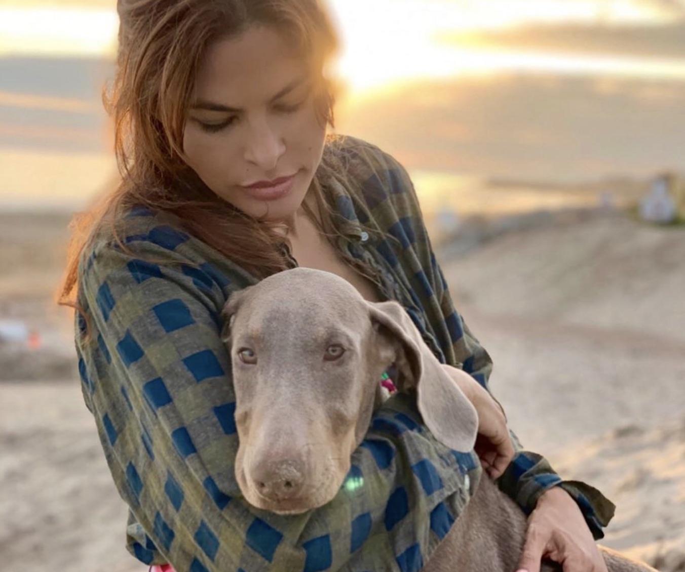Eva Mendes & Ryan Gosling Adopt Rescue Dog, Lucho