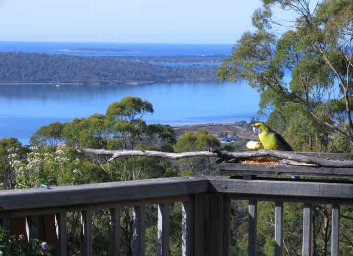 After Hiking At Bay Of Fires In St. Helens, Tasmania, Stay In The Bed Of Treetops B&B