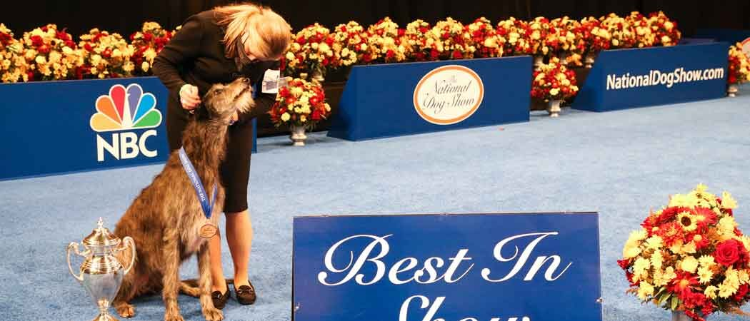 Scottish Deerhound Claire Wins Best In Show At National Dog Show