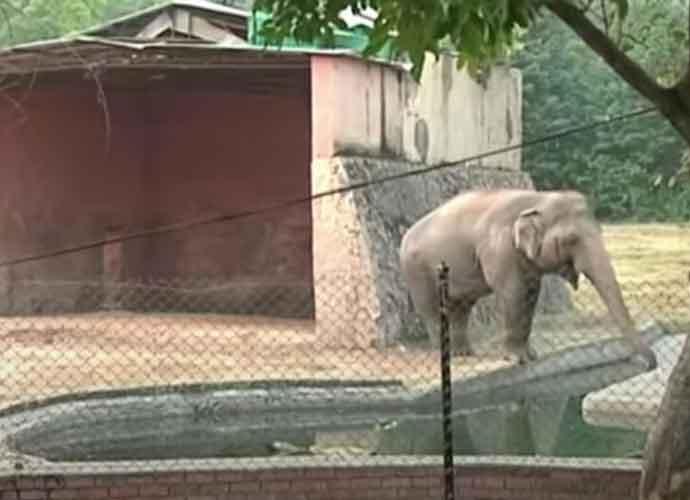 Cher Travels To Pakistan To Rescue 'World's Loneliest Elephant' Kaavan