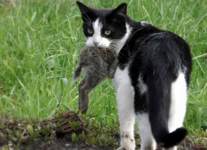1,000 Feral Cats Released In Chicago To Fight Rat Epidemic