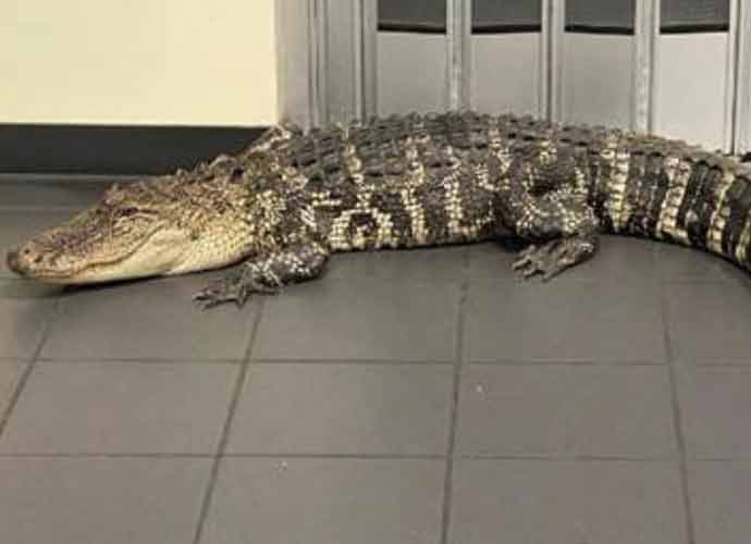 Alligator Found In Lobby Of A Florida Post Office