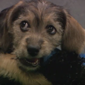 Puppy Bowl IX MVP Goes To Schnauzer/Beagle Mix Marta