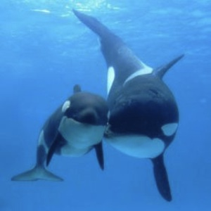 Heart Cancels On SeaWorld After Watching 'Blackfish' Documentary